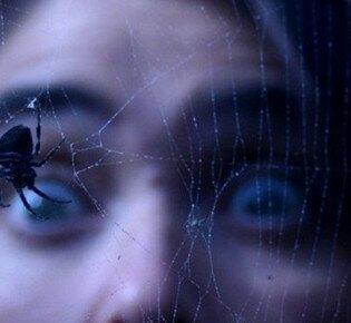 Перестаньте бояться пауков, использую эти надежные методы лечения арахнофобии