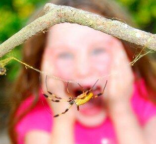 Как избавиться от боязни насекомых